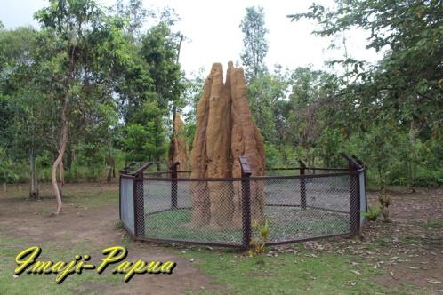 musamus atau rumah semut di dekat patok batas ri - png, sota merauke