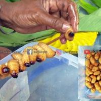 Review Kuliner Ulat Sagu Khas Papua