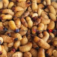 Review Kuliner Es Krim Ulat Sagu, Sate Ulat Sagu & Ulat Sagu Mentah